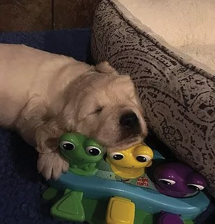 Puppy 1. Name